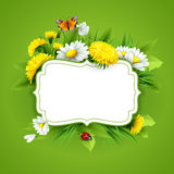 Fresh spring background with grass, dandelions and daisies Royalty Free Stock Images