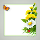 Fresh spring background with grass, dandelions and daisies Royalty Free Stock Photos