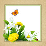 Fresh spring background with grass, dandelions and daisies Stock Images