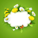 Fresh spring background with grass, dandelions and daisies Royalty Free Stock Image