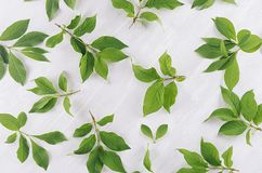 Fresh spring background - green foliage on soft light white wood board, top view, pattern. Fresh spring background - green foliage on soft light white wood stock photos
