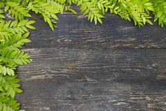 Fresh spring background . Green leaves Royalty Free Stock Photos