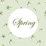 Fresh spring background with small snowdrops with green leaves. Vintage background with snowdrops pattern. Vector illustration Royalty Free Stock Images
