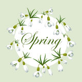 Fresh spring background with snowdrops with green leaves. Vintage background. Vector illustration Stock Photo