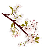 Fresh Spring Blossom Royalty Free Stock Images