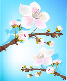 Fresh spring blossom Stock Photography