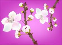 Fresh spring blossom. Illustration of lovely fresh blossom in spring vector illustration