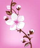 Fresh spring blossom. Illustration of lovely fresh blossom in spring royalty free illustration