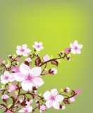 Fresh spring blossom. Illustration of lovely fresh blossom in spring Royalty Free Stock Photography