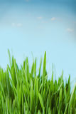 Fresh spring bokeh abstract background Stock Images