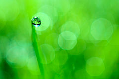 Fresh spring bokeh and green grass with dew. Abstract Nature Background Stock Photo
