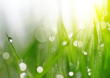 Fresh spring bokeh and green grass with dew drops. Royalty Free Stock Image