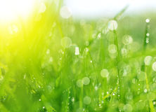 Fresh spring bokeh and green grass. Stock Photo