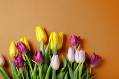 Fresh spring bouquet  on vivid background Royalty Free Stock Photos