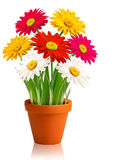 Fresh spring color flowers  Vector Stock Photography