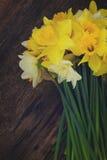 Fresh spring daffodils Stock Photo
