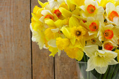 Fresh spring daffodils Stock Photography