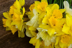 Fresh spring daffodils Stock Image