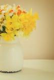 Fresh spring daffodils Royalty Free Stock Image