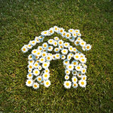 Fresh Spring Daisie flowers in the shape of a house. On a field of grass Stock Photography