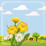 Fresh spring, daisies and dandelions, farm. Fresh spring farm daisies and dandelions, grass, greeting, , Cartoon style, vector illustration Stock Photo
