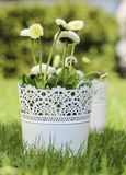 Fresh spring decorations Royalty Free Stock Photography