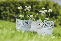 Fresh spring decorations for the First Communion Stock Photo