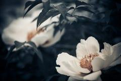 Fresh Spring Flower Stock Photo