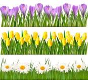 Fresh spring and flower borders vector illustration