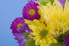 Fresh spring flower bouquet Stock Image