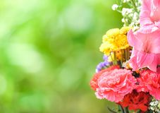 Fresh spring flower bunch colorful plant with carnation flowers beautiful various on green nature royalty free stock image