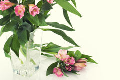 Fresh spring flowers as a holiday postcard design Royalty Free Stock Photos