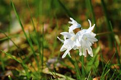 Fresh spring flowers Royalty Free Stock Images