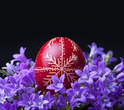 Fresh spring flowers and dyed easter egg Royalty Free Stock Images