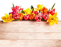 Fresh spring flowers forming a seasonal border Stock Images