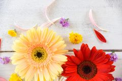 Fresh spring flowers gerbera colorful flower various on wooden white background. Fresh spring flowers gerbera colorful and flower various on wooden white stock photos