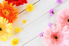 Fresh spring flowers gerbera colorful flower various on wooden white background. Fresh spring flowers gerbera colorful and flower various on wooden white royalty free stock image