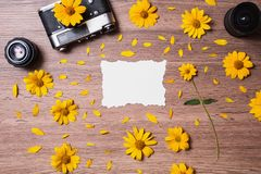 Fresh spring flowers. Greeting card stock photography