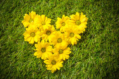 Fresh spring flowers in heart shape on grass. Royalty Free Stock Photo