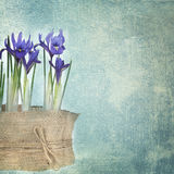 Fresh spring flowers Stock Images