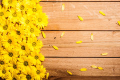 Fresh spring flowers and petals on rustic wood. Royalty Free Stock Image