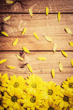 Fresh spring flowers and petals on rustic wood. Stock Photos
