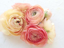 Ranunculus in warm shades Royalty Free Stock Photos