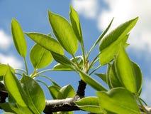Fresh spring foliage Stock Photos