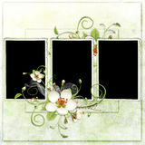 Fresh spring frame with apple tree flowers Stock Images