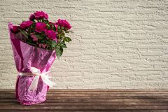 Fresh spring garden pink roses bouquet on wooden table, copy space Stock Photos