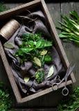 Fresh spring garni bouquet herbs natural organic spices Stock Image