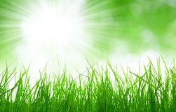 Fresh spring grass. On green natural background Stock Image
