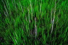 Fresh spring grass. Background texture Stock Photos