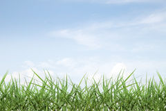 Fresh spring grass with blue sky Royalty Free Stock Image